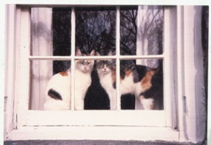 photo of two cats looking out a window
