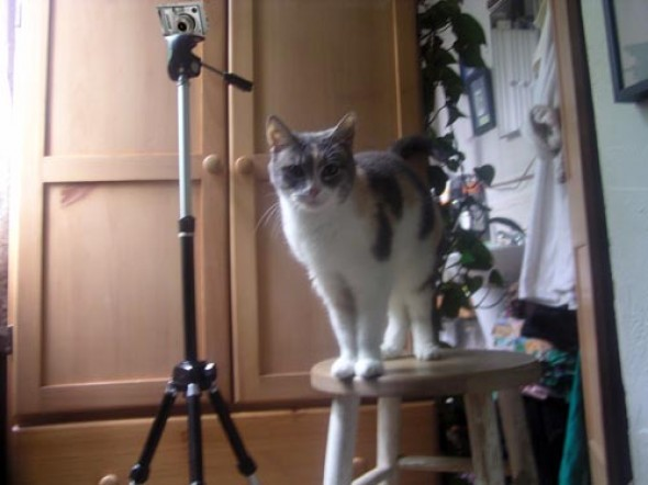 Peaches with camera