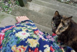 photo of cat and flowered dress