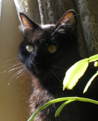photo of black cat with plant