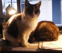 cats on desk