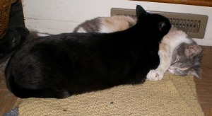 photo of black cat and calico cat sleeping