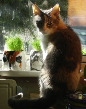 cat with grass in planter