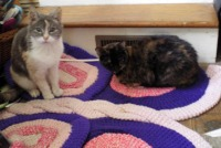 peaches and Kelly on the butterfly rug