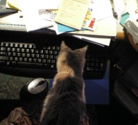 photo of calico cat with keyboard