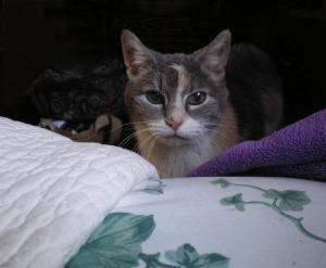 photo of calico cat