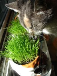 kitty enjoys her greens