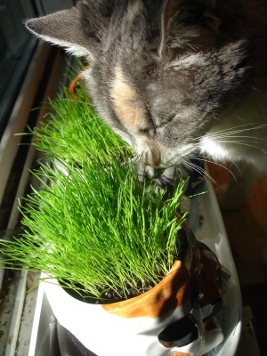 kitty enjoys her greens