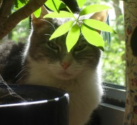 Photo of cat with plant