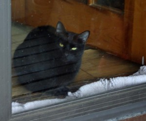 photo of black cat at door