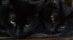 photo of two black cats on chair