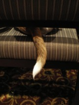 photo of dog's tail on chair