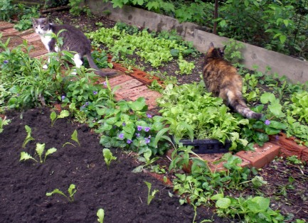 photo of two cats in a garden