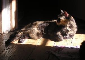 photo of tortie cat in the sun