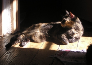 photo of tortie cat in the sun