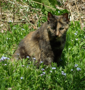photo of cat in grass and flowers