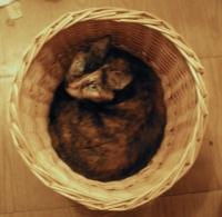 photo of tortie cat in basket