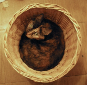 photo of tortie cat in basket