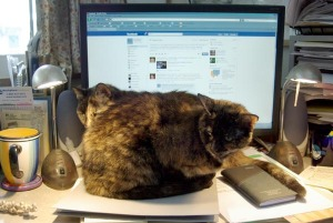 photo of two tortie cats