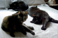 photo of cats on bed
