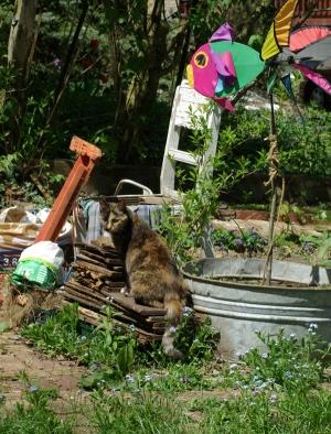 photo of cat in garden