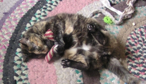 tortoiseshell cat with toy