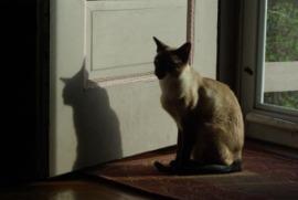 photo of siamese cat by door