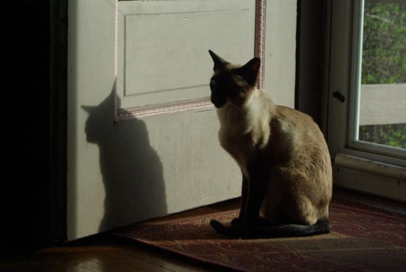 photo of siamese cat by door