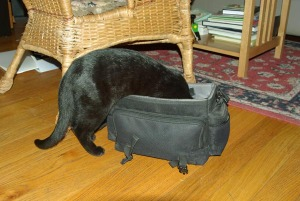 black cat in camera bag