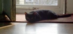 black cat by the open door