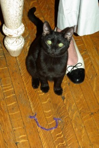 photo of black cat with show on wood floor