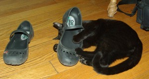 photo of black cat with black shoe
