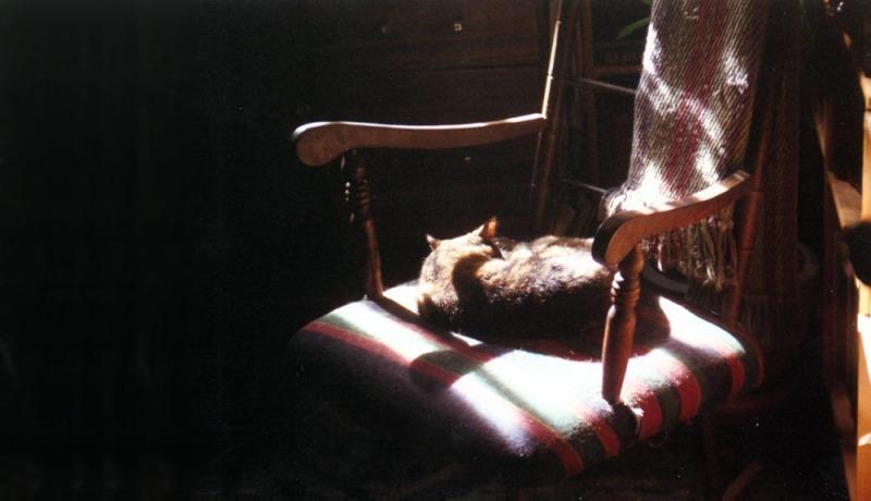 cat sleeping on rocker