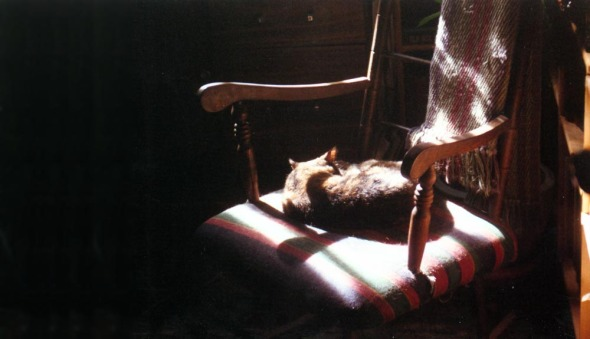 cat sleeping on rocker