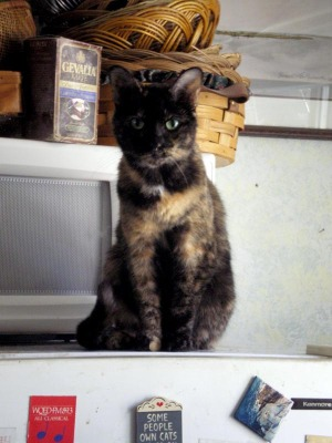 photo of a cat on refrigerator