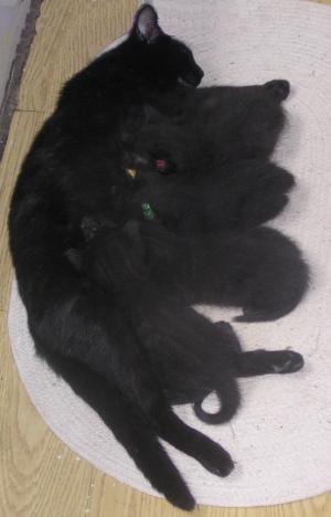 photo of cat nursing kittens