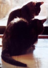 photo of two cats in silhouette