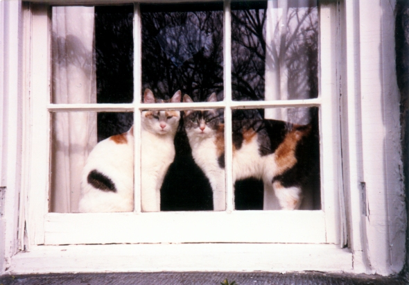 two calico cats at a window