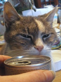 cat and can of food