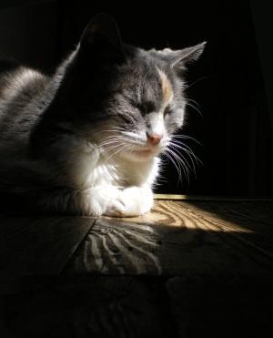 photo of calico cat on wooden floor