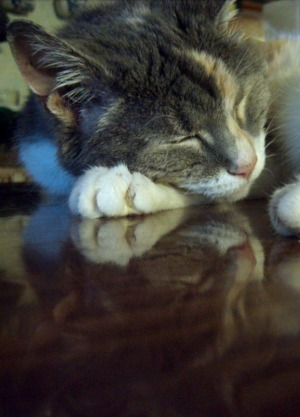 cat reflected in table