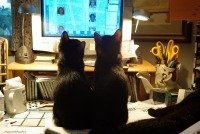 photo of two kittens looking at computer