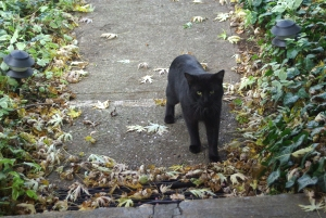 photo of black cat on sidewalk