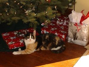 calico cat under christmas tree