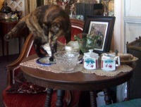 cat on table with ceramics