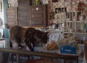 cat with jar of biscotti