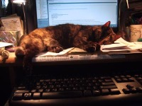 cat sleeping on desk