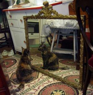 tortoiseshell cat looking in mirror