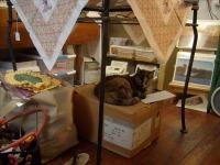 cat sleeping on box