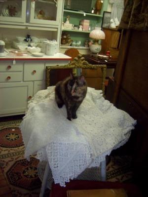 cat on tablecloths